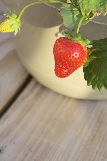 Strawberries and More