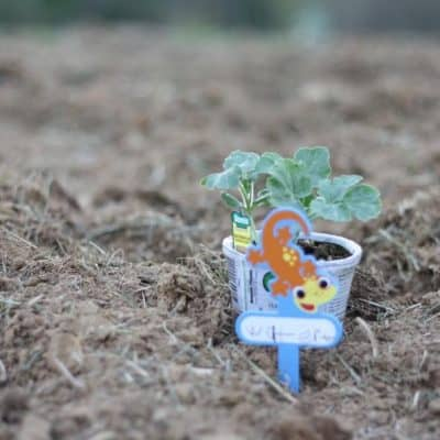 Tips for Growing a Healthy Vegetable Garden