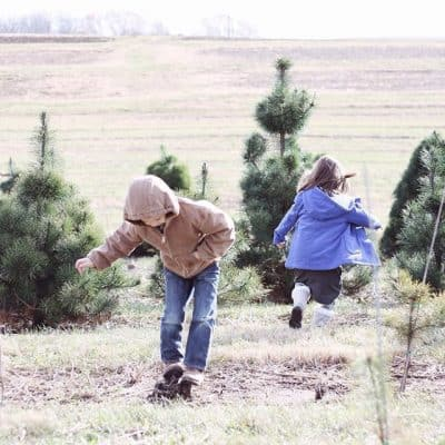 Christmas | Tree Farm