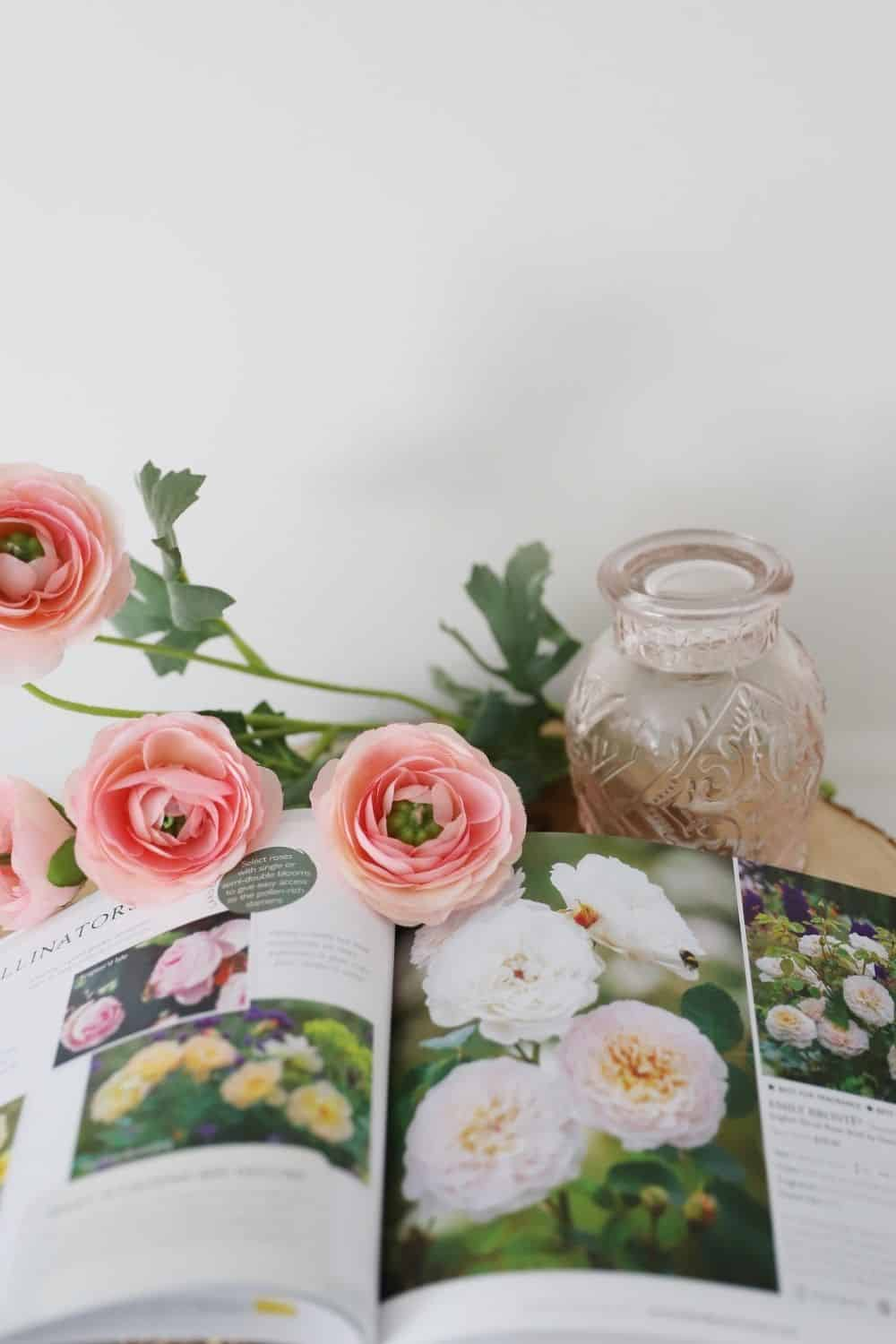 Tips on How to Plant Bare Root Roses