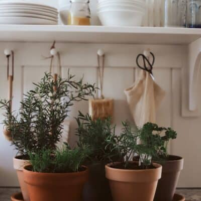 terra cotta pots filled with herbs on kitchen counter