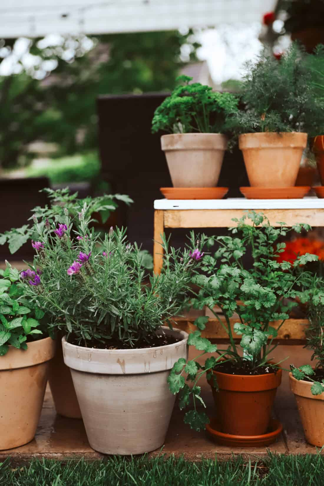 spring herb container garden that has grown